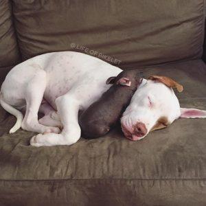 Punk está sendo muito bem cuidada pelos irmãos cães e recebendo muito carinho. (Foto: Reprodução / Instagram Life of Pkelet)