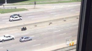 O policial fez com que os motoristas da estrada diminuíssem a velocidade, para evitar que o cão fosse atropelado. (Foto: Reprodução / CBS DFW)