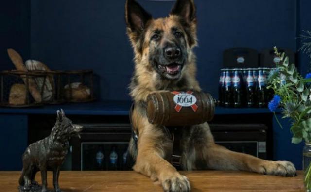 Um bar que tem cães como funcionários! (Foto: Reprodução / BarkPost)