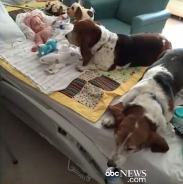 Os cães dormiram com Nora pela última vez. (Foto: Reprodução / Youtube / ABC)