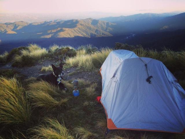 Dina Wuest estava acampando com sua cachorra Bonnie. (Foto: Reprodução / The Dodo)