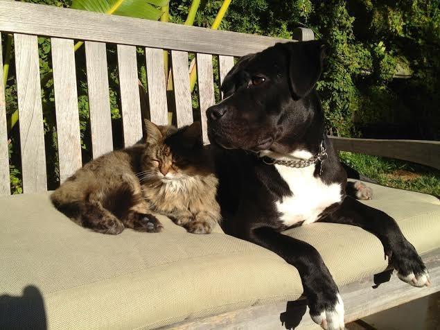 Roxy com um de seus irmãos felinos.  (Foto: Reprodução / The Dodo)