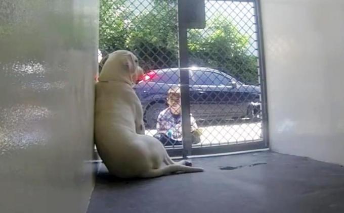 Essas visitas são importantes para Jacob e para os cães. (Foto: Reprodução / The Dodo)
