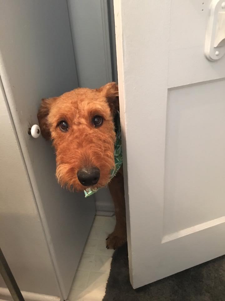 cachorro-banheiro-02