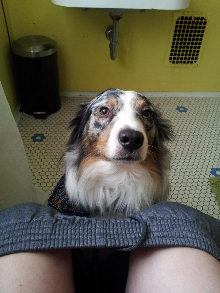 cachorro-banheiro-04