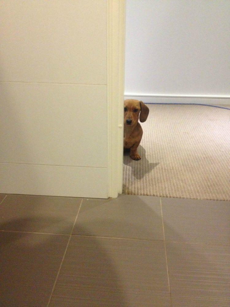 cachorro-banheiro-10