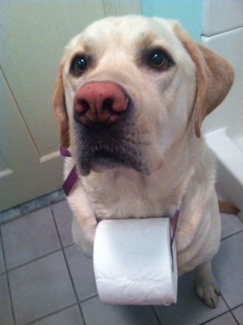 cachorro-banheiro-11