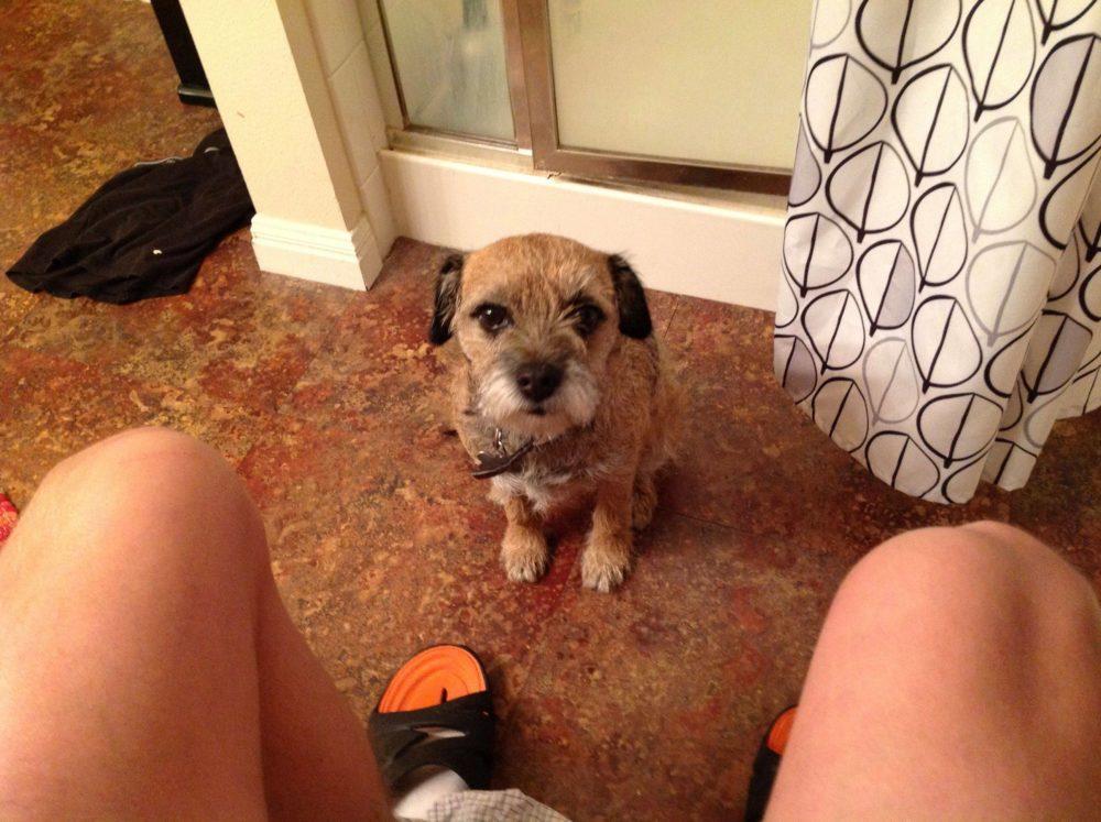 cachorro-banheiro-19