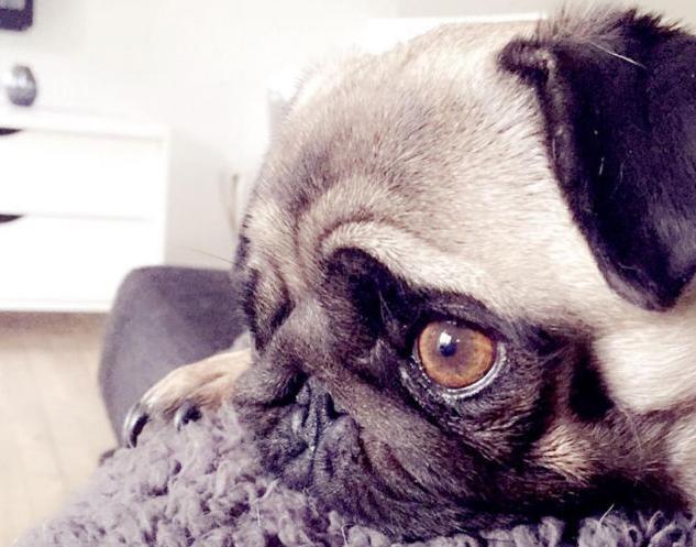 Como os cães lidam com a morte de alguém querido? (Foto: Reprodução / BarkPost)