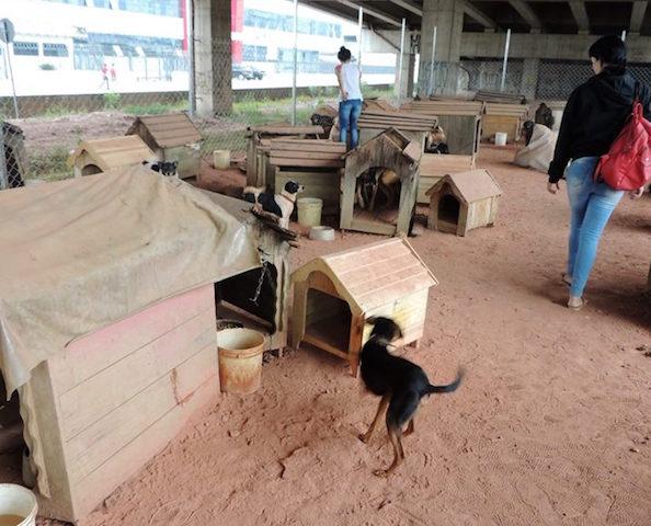 Os cães estão morando debaixo do viaduto. (Foto: Reprodução / Facebook / ONG SOS Cidadania Animal)