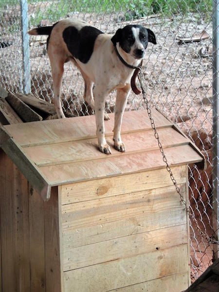 Os cachorros receberam casinhas de madeira. (Foto: Reprodução / Facebook / ONG SOS Cidadania Animal)