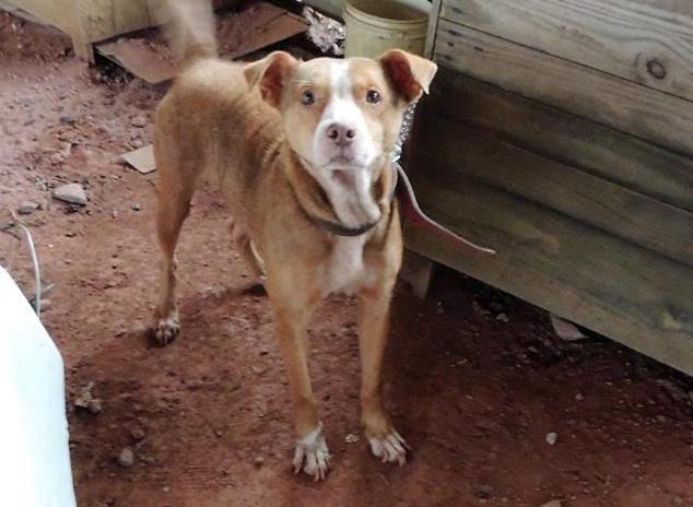 Um dos cães da ONG. (Foto: Reprodução / Facebook / ONG SOS Cidadania Animal)