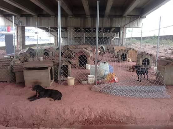 Os cães estão desalojados. (Foto: Reprodução / Facebook / Jornal Parque São Vicente)