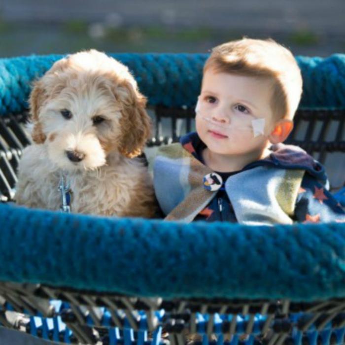 Apesar do cão ainda estar em treinamento, ele já foi apresentado ao menino. (Foto: Reprodução / BarkPost)