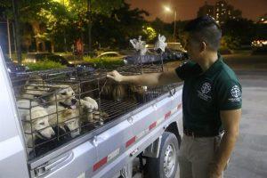 O resgate não foi fácil, mas conseguiu salvar 34 animais. (Foto: Reprodução / Humane Society International)