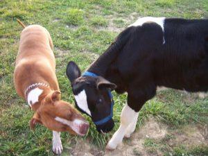Os animais se conhecerem ainda jovens, quando passaram a viver juntos no Sunrise Sanctuary. (Foto: Reprodução / Sunrise Sanctuary)