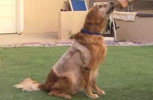 Agora, livre do tumor, Henry terá alguns bons anos de felicidade pela frente. (Foto: Reprodução / Newport Beach Animal Shelter)