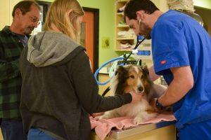 O cãozinho fez vários exames e nada detectava o que ele tinha. (Foto: Reprodução / DoveLewis Emergency Animal Hospital)