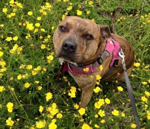 Michael Bay também se comprometeu a encontrar um lar definitivo para a cadela. (Foto: Reprodução / Freshfields Animal Rescue)