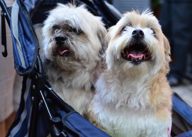 A relação entre cães e tutores brasileiros foi tema do estudo. (Foto Ilustrativa: Karina Sakita)