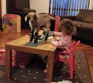 Os animais estão presentes em todos os momentos do seu dia a dia. (Foto: Reprodução / Greener Pastures Sanctuary)