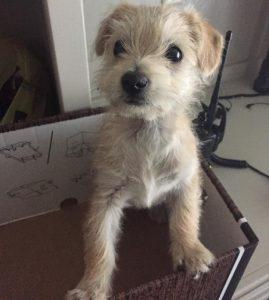 Hoje o cãozinho está seguro com uma instituição de cuidados animal e logo será colocado para adoção. (Foto: Reprodução / Hughson Police Department)
