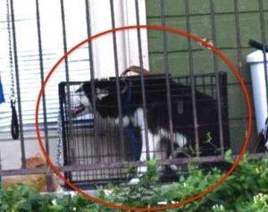 Com o passar do tempo, a gaiola ficou tão pequena que o cão tinha que ficar curvado e não conseguia se movimentar. (Foto: Reprodução / Cassandra Clark)