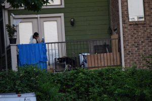 O cão vivia preso em uma gaiola do lado de fora da casa. (Foto: Reprodução / Cassandra Clark)
