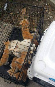 Além do cão, outros 12 animais viviam em situação de risco dentro da casa. Todos foram salvos pela postagem de Cassandra. (Foto: Reprodução / Cassandra Clark)