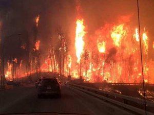 Por conta de um incêndio florestal que afetou a área de Fort McMurray, no Canadá, muitos moradores foram obrigados a abandonar suas casas. (Foto: Reprodução / Life With Dogs)