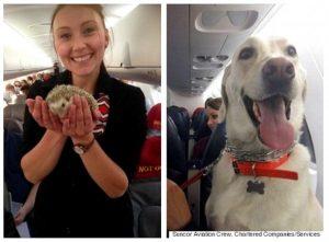 O avião levou uma grande variedade de animais. (Foto: Reprodução / Huffpost Alberta)