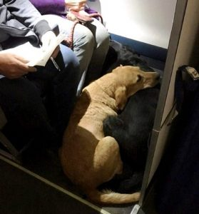 Apesar da quantidade de animais, todos eles ficaram muito tranquilos durante todo o voo. (Foto: Reprodução / Life With Dogs)