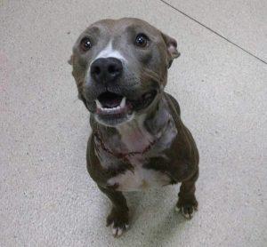 Roxanne fez cirurgia, se livrou do inchaço, está com sua cabeça no tamanho normal e segue se recuperando. (Foto: Reprodução / Rescue Dogs Rock NYC)