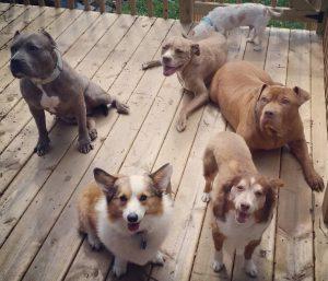 Hoje Fifty vive em uma casa que dá lar temporário para outros animais e se tornou um ótimo irmão adotivo. (Foto: Reprodução / Instagram Superfiftyboy)