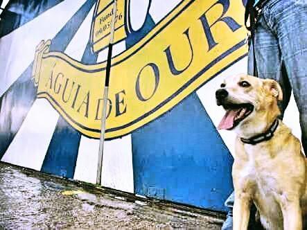 A Águia de Ouro vai homenagear os cães. (Foto: Reprodução / Facebook / Águia de Ouro)