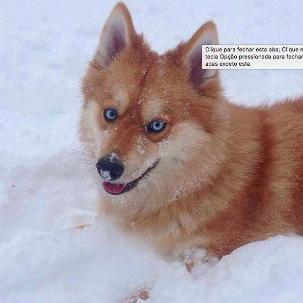 Muitos ficam na dúvida se é uma cachorra ou uma raposa! (Foto: Reprodução / Instagram)