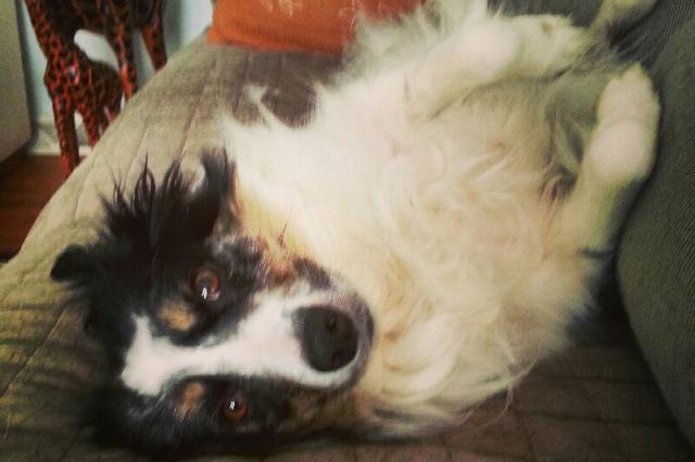 A cachorra Bailey salvou a vida de seu tutor. (Foto: Reprodução / Robert Bova / Go Fund Me)