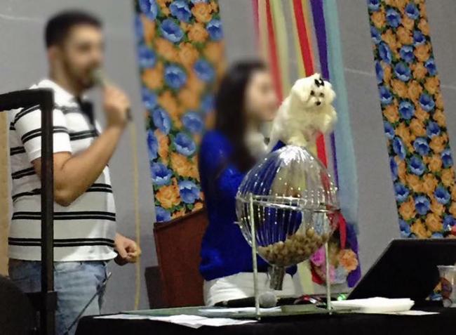 Cachorro sendo apresentado como brinde do bingo. (Foto: Reprodução / Facebook / Viviane Alexandre)