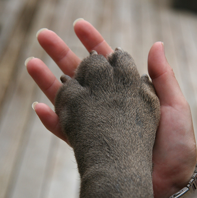 cachorro-pata-07