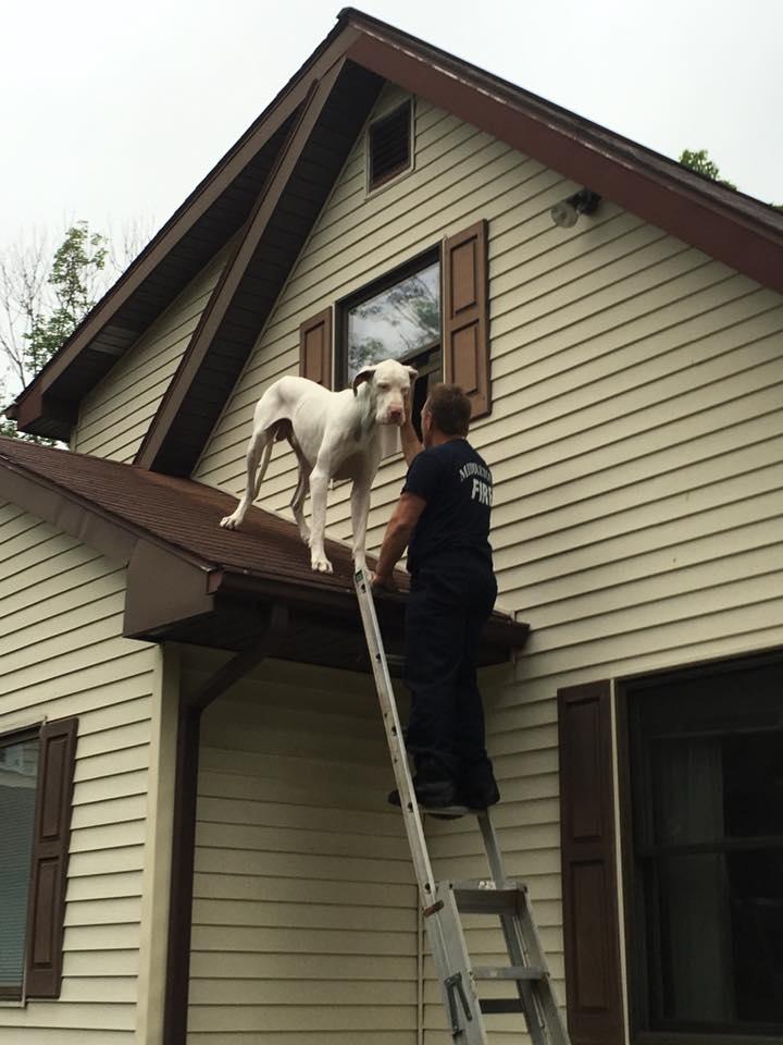 Os bombeiros conseguiram levar o cão para dentro de casa. (Foto: Reprodução / Facebook / City of Middletown Professional Firefighters Local 1073)