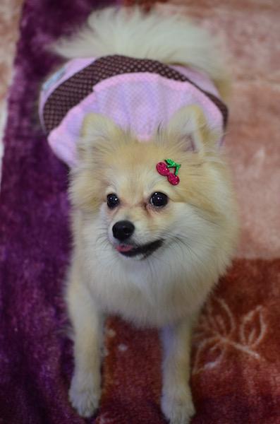 Lola usando Cereja do Kit Floresta. (Foto: Karina Sakita)