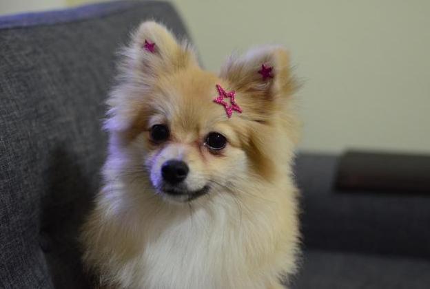 Lola usando Estrela Vazada e Estrelas Mini do Kit Estrelas. (Foto: Karina Sakita)
