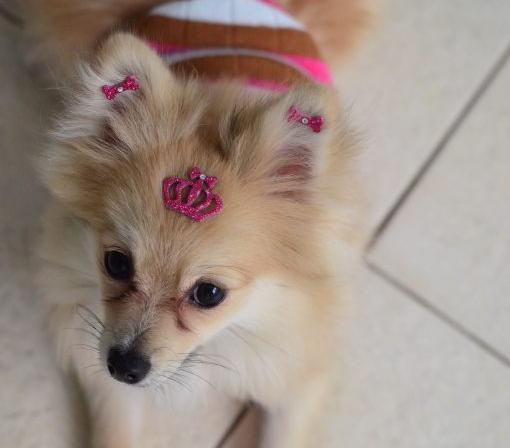 Lola usando Conjunto Coroa Real do Kit Realeza. (Foto: Karina Sakita)