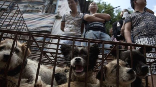 Milhares de cães são abatidos no festival. (Foto: Reprodução / BBC UK)