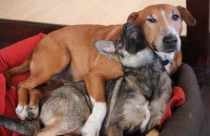 Os animais se apaixonaram desde o primeiro instante. (Foto: Reprodução / Tin Can Town)