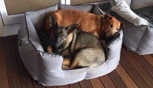 Caesar e Saskia se conheceram no lar temporários e se tornaram grandes amigos. (Foto: Reprodução / Tin Can Town)