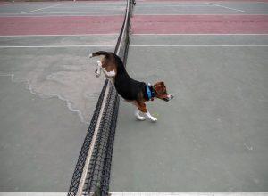 O cão ganhou muita qualidade de vida e hoje é capaz de brincar, correr e pular. (Foto: Reprodução / Karma Rescue)