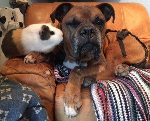 Os melhores amigos se deram bem desde que se conheceram. (Foto: Reprodução / Holly Walthers)