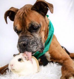 Rex estava se sentindo solitário ao perder um amigo e Smores chegou na hora certa, para trazer mais alegria ao cão. (Foto: Reprodução / Holly Walthers)