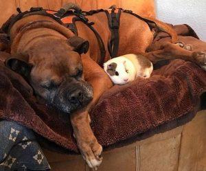 Cochilar também é uma coisa que eles adoram fazer juntos. (Foto: Reprodução / Holly Walthers)